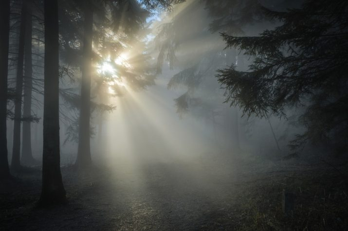 What does the bible say about light and darkness